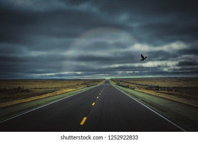 Single Bird With a Rainbow on a Dark Lonely Highway - Magical, Ethereal, Mystical