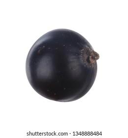 single black currant isolated on white background