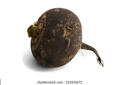 Single black radish isolated on white background.