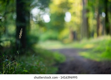 Single blade of grass with the natural background with path in the lush green forest