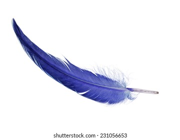 single blue feather isolated on white background