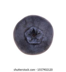 single blueberry isolated on white background