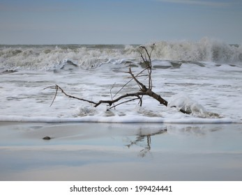 A single branch in the stormy sea waters