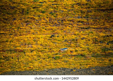 Single building surrounded by autumn colored shrubs and trees at the border of Dimmuborgir near Lake Myvatn in northeastern Iceland, photographed from above at the rim of the crater of Krafla Volcano