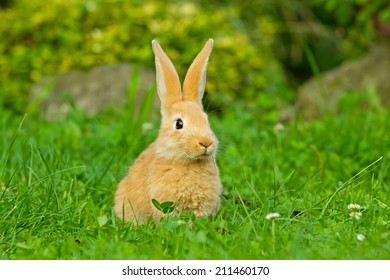 single bunny rabbit sitting in the green grass
