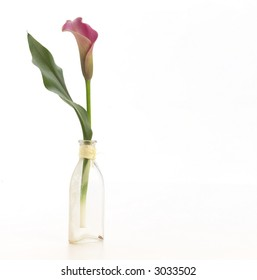 Single calla lily in small vase.