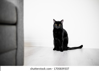 Single Cat Looking At Camera In Home