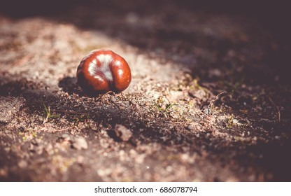 Single chestnut on the ground