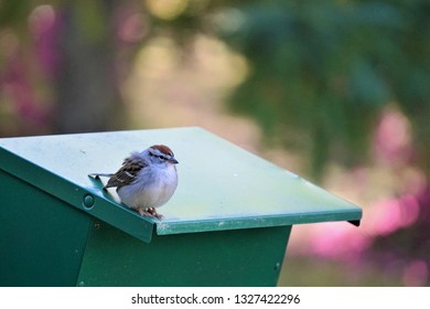 A single chipping sparrow (Spizella passerina) perching on the roof of green feeder enjoy watching and relaxing on the soft focus garden background, Spring in GA USA.