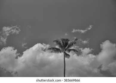 Single coconut palm tree against a partly cloudy background.