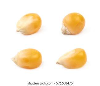 Single corn kernel isolated over the white background, set of four different foreshortenings