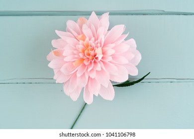Single crepe paper dahlia flower on turquoise wooden background
