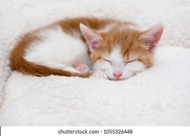 Single cute kitten sleeping in a woollen bed