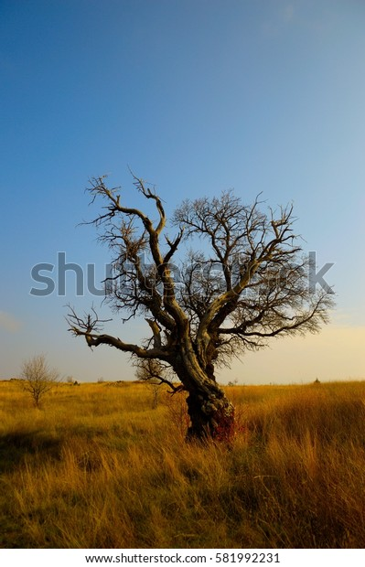 A single death tree is in the grass