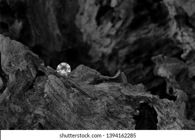 A Single Diamond on a Dried Tree Root, Showing the Facet Cut of the Gem Stone with the Harsh Texture of the Old Carbon Material.