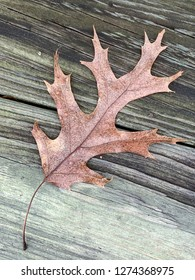 A single dominant brown leaf with stem set against a weather-beaten planks of wood in a vertical image format.