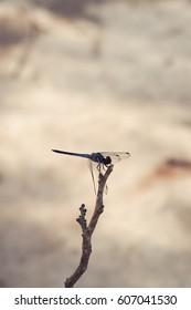 single dragonfly