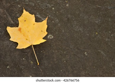 Single dried yellow maple leaf on a stone background with copy space. Fall foliage background.