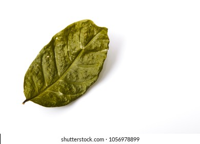 Single dry green leaf leaf on white background, Environmental concepts