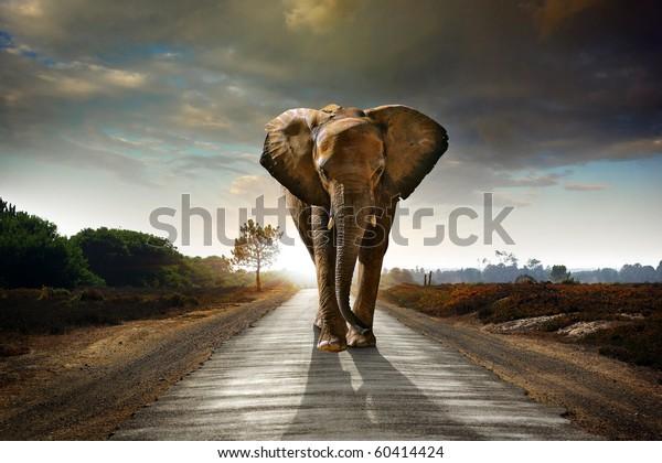 Ein Elefant, der auf einer Straße mit der Sonne von hinten spaziert