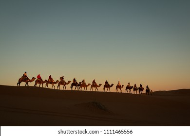 A single file line of camels and tourists trekking into the desert for an overnight camping experience. Camel trekking and camping like traditional moroccan berber people.