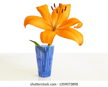A single flower isolated in a vase. One orange, yellow Lilium in a blue glass of water on the table on a white background.