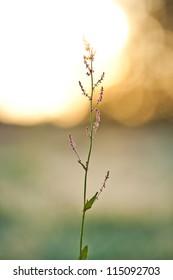Single flower in morning sunrise
