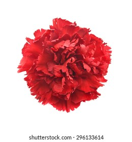 Single flower, red carnation isolated on white background. Top view