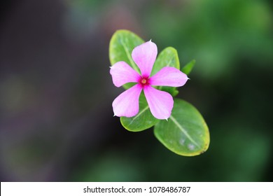Single flower shot from top
