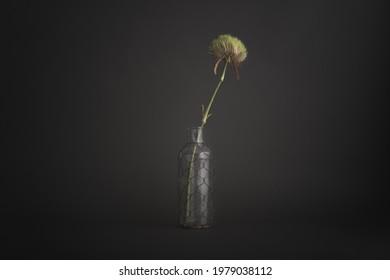 Single flower in vintage bottle