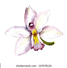 Single flower of white orchid