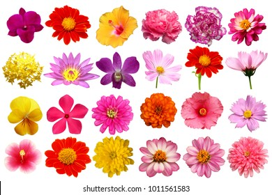 single flowers isolated collection set with clipping paths