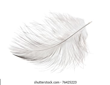 single fluffy light feather isolated on white background
