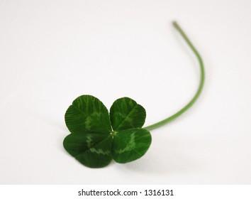 A single four leaf clover.