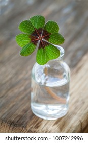 Single four leaved clover in a little bottle