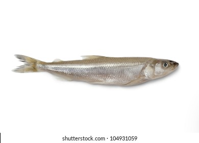 Single fresh European smelt fish on white background