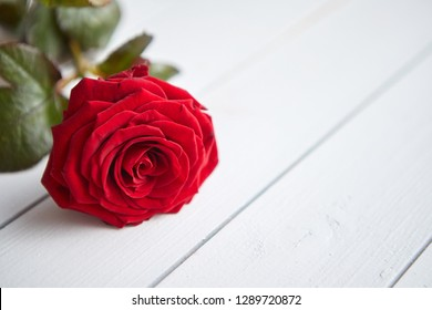 Single fresh red rose flower on the white wooden table. Valentines or love concept. With copy space.