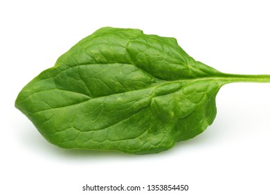 Single fresh spinach leaf isolated on white background