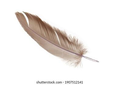 Single gray bird feather isolated on white background. feather pen. symbol or logo.