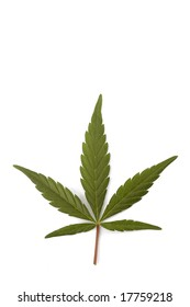 A single green leaf of hemp also known as cannabis or marijuana isolated
