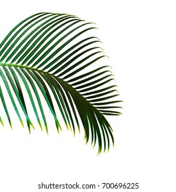 Single green palm leaf isolated on white background