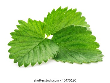 single green strawberry leaf  isolated on white background