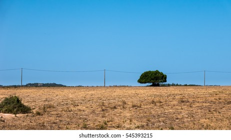 A single green tree standing in a dry, brown meadow