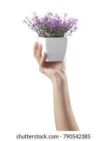 Single hand holds aloft a potted purple lilac