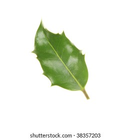 Single holly leaf isolated against white
