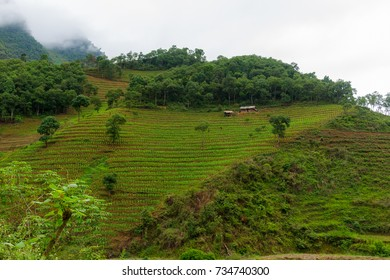A single home among rice terraces in the mountains in Ha Giang, Vietnam