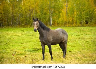 Single horse in field