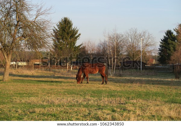 a single horse on the grass