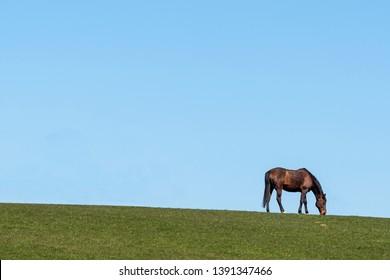 Single horse on a meadow in Schleswig-Holstein, Germany