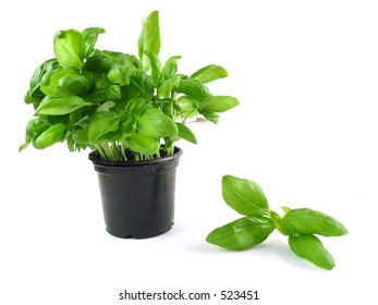 Single, isolated basil on white background... add it to pasta and tomatoes... yummy!
